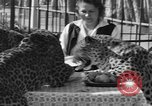 Image of leopards Los Angeles California USA, 1933, second 39 stock footage video 65675042746