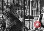 Image of leopards Los Angeles California USA, 1933, second 48 stock footage video 65675042746