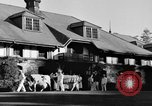 Image of new strain of cow Williamstown Massachusetts USA, 1935, second 19 stock footage video 65675042763