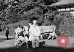 Image of new strain of cow Williamstown Massachusetts USA, 1935, second 22 stock footage video 65675042763