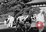 Image of new strain of cow Williamstown Massachusetts USA, 1935, second 25 stock footage video 65675042763