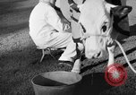 Image of new strain of cow Williamstown Massachusetts USA, 1935, second 56 stock footage video 65675042763