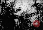 Image of Viet Cong soldiers Vietnam, 1967, second 26 stock footage video 65675043129