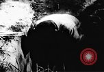 Image of Viet Cong soldiers Vietnam, 1967, second 62 stock footage video 65675043131