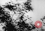 Image of Viet Cong soldiers Vietnam, 1967, second 27 stock footage video 65675043140