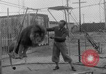 Image of Lion named King Tuffy Venice Beach Los Angeles California USA, 1935, second 24 stock footage video 65675043352