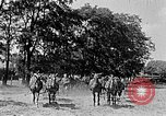 Image of Hitler Youth Poland, 1940, second 50 stock footage video 65675043394