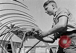 Image of Hitler Youth Poland, 1940, second 34 stock footage video 65675043401