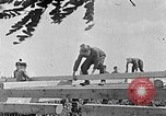 Image of Hitler Youth Poland, 1940, second 56 stock footage video 65675043401