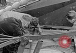 Image of Hitler Youth Poland, 1940, second 57 stock footage video 65675043401