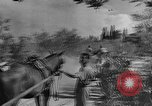 Image of King George VI Florence Italy, 1944, second 41 stock footage video 65675043451
