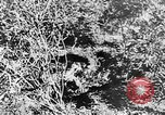 Image of Italian troops Italy, 1943, second 42 stock footage video 65675043456