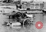 Image of Temples South India, 1937, second 43 stock footage video 65675043492