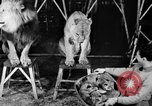 Image of Big Police Circus Rochester Indiana USA, 1938, second 14 stock footage video 65675043531