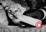 Image of Big Police Circus Rochester Indiana USA, 1938, second 27 stock footage video 65675043531