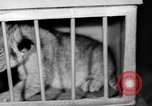 Image of Big Police Circus Rochester Indiana USA, 1938, second 34 stock footage video 65675043531