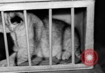 Image of Big Police Circus Rochester Indiana USA, 1938, second 35 stock footage video 65675043531