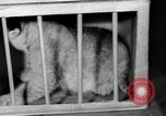 Image of Big Police Circus Rochester Indiana USA, 1938, second 36 stock footage video 65675043531