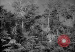 Image of forest Caracas Venezuela, 1940, second 13 stock footage video 65675050630
