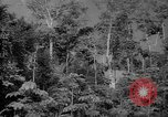 Image of forest Caracas Venezuela, 1940, second 14 stock footage video 65675050630