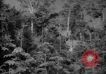 Image of forest Caracas Venezuela, 1940, second 15 stock footage video 65675050630