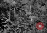 Image of forest Caracas Venezuela, 1940, second 16 stock footage video 65675050630