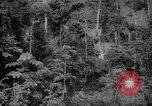 Image of forest Caracas Venezuela, 1940, second 17 stock footage video 65675050630