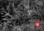 Image of forest Caracas Venezuela, 1940, second 18 stock footage video 65675050630
