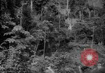 Image of forest Caracas Venezuela, 1940, second 19 stock footage video 65675050630