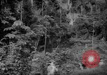 Image of forest Caracas Venezuela, 1940, second 20 stock footage video 65675050630