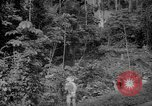 Image of forest Caracas Venezuela, 1940, second 21 stock footage video 65675050630