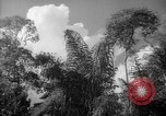 Image of forest Caracas Venezuela, 1940, second 32 stock footage video 65675050630