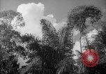 Image of forest Caracas Venezuela, 1940, second 33 stock footage video 65675050630