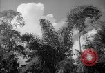 Image of forest Caracas Venezuela, 1940, second 34 stock footage video 65675050630