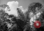 Image of forest Caracas Venezuela, 1940, second 35 stock footage video 65675050630