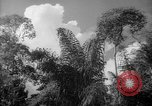 Image of forest Caracas Venezuela, 1940, second 37 stock footage video 65675050630