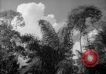 Image of forest Caracas Venezuela, 1940, second 38 stock footage video 65675050630
