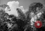 Image of forest Caracas Venezuela, 1940, second 39 stock footage video 65675050630