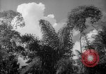 Image of forest Caracas Venezuela, 1940, second 40 stock footage video 65675050630