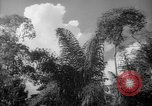 Image of forest Caracas Venezuela, 1940, second 46 stock footage video 65675050630