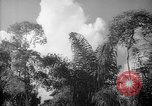 Image of forest Caracas Venezuela, 1940, second 47 stock footage video 65675050630