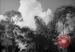Image of forest Caracas Venezuela, 1940, second 49 stock footage video 65675050630