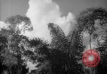 Image of forest Caracas Venezuela, 1940, second 52 stock footage video 65675050630