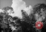 Image of forest Caracas Venezuela, 1940, second 53 stock footage video 65675050630