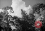 Image of forest Caracas Venezuela, 1940, second 54 stock footage video 65675050630