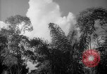 Image of forest Caracas Venezuela, 1940, second 55 stock footage video 65675050630