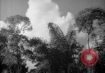 Image of forest Caracas Venezuela, 1940, second 56 stock footage video 65675050630