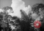 Image of forest Caracas Venezuela, 1940, second 57 stock footage video 65675050630