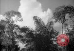 Image of forest Caracas Venezuela, 1940, second 58 stock footage video 65675050630