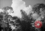 Image of forest Caracas Venezuela, 1940, second 59 stock footage video 65675050630